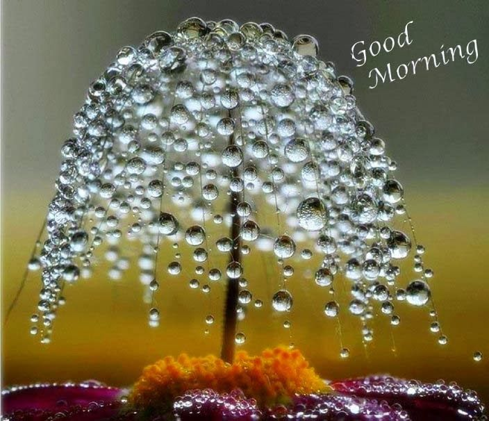 Lovely and Beautiful Good Morning Wallpapers - Image Wallpapers | Android | Pinterest ...