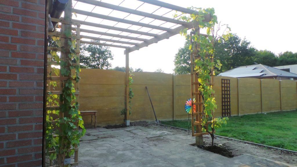 Druivelaar bijsnoeien voor pergola moestuin forum voor en door tuin idee pinterest - Bedekking voor pergola ...
