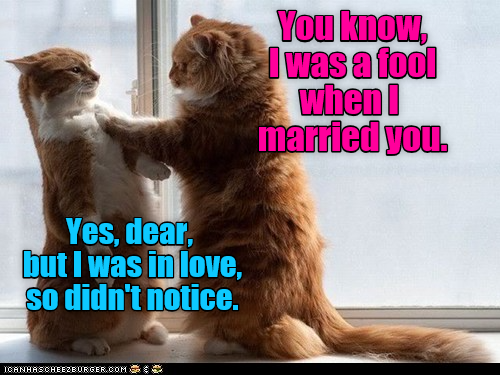 Love Is Blind Cats Funny Cats Cat Love