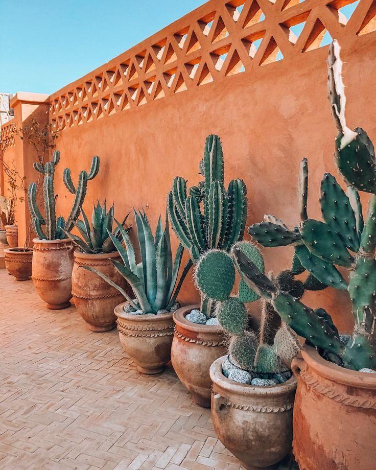 Cactus Au Maroc Nel 2020 Piante Di Cactus Giardino Di Piante