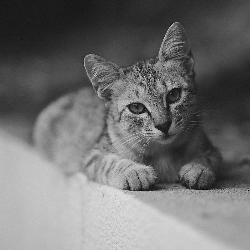 photo: ***** | photographer: Andrey GRAY Repin | WWW.PHOTODOM.COM