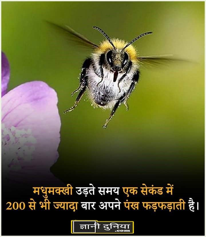 Interesting Facts About Animals In Hindi Facts Facts Fun Facts