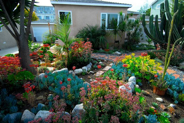 A drought tolerant front yard low maintenance low water for Low maintenance low water landscaping