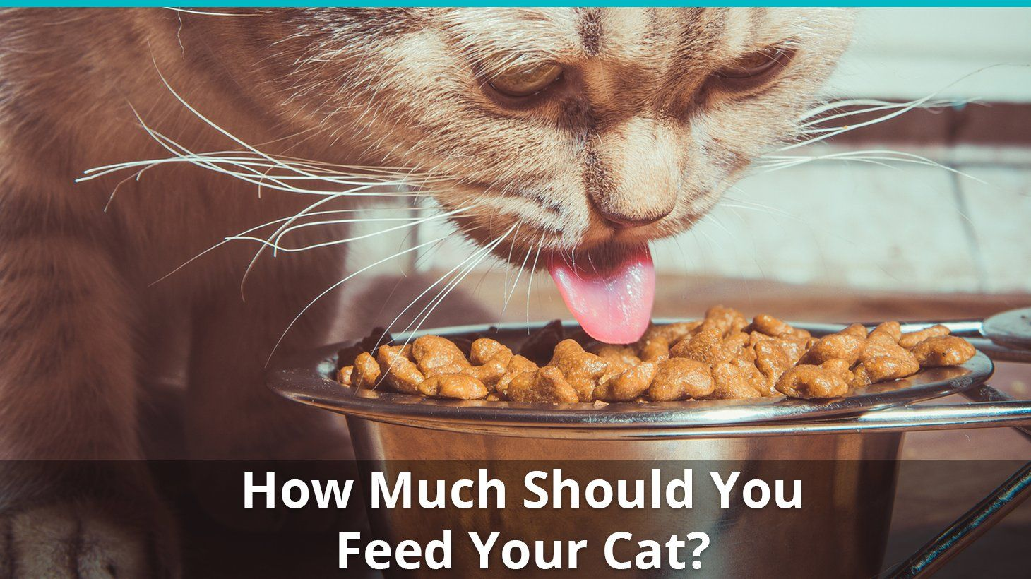 How Much Should I Feed My Cat The Cat Feeding Guide Cat Feeding Guide Cat Feeding Cat Food