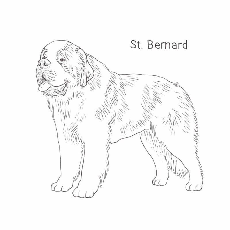 Saint Bernard Dog Drawing Dog Breeds List St Bernard Dogs Bernard Dog Dog Breeds