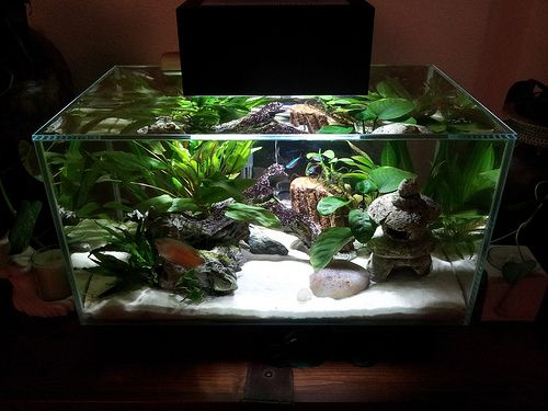 Nano fish tanks fluval edge 23l the world first 3d water for First fish tank