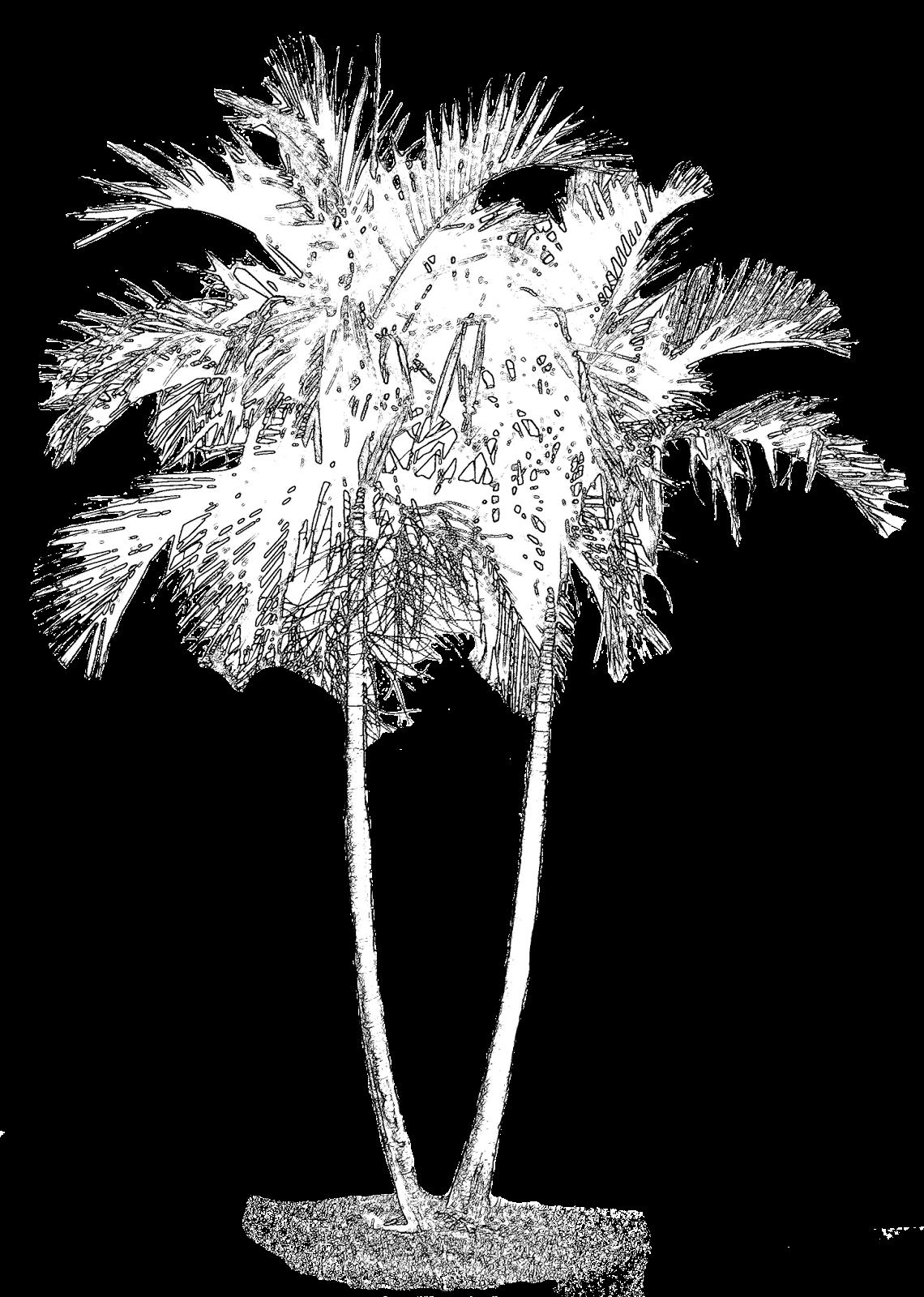 Everything 4 Scrapbooking Free Palm Tree Digi Stamp 2