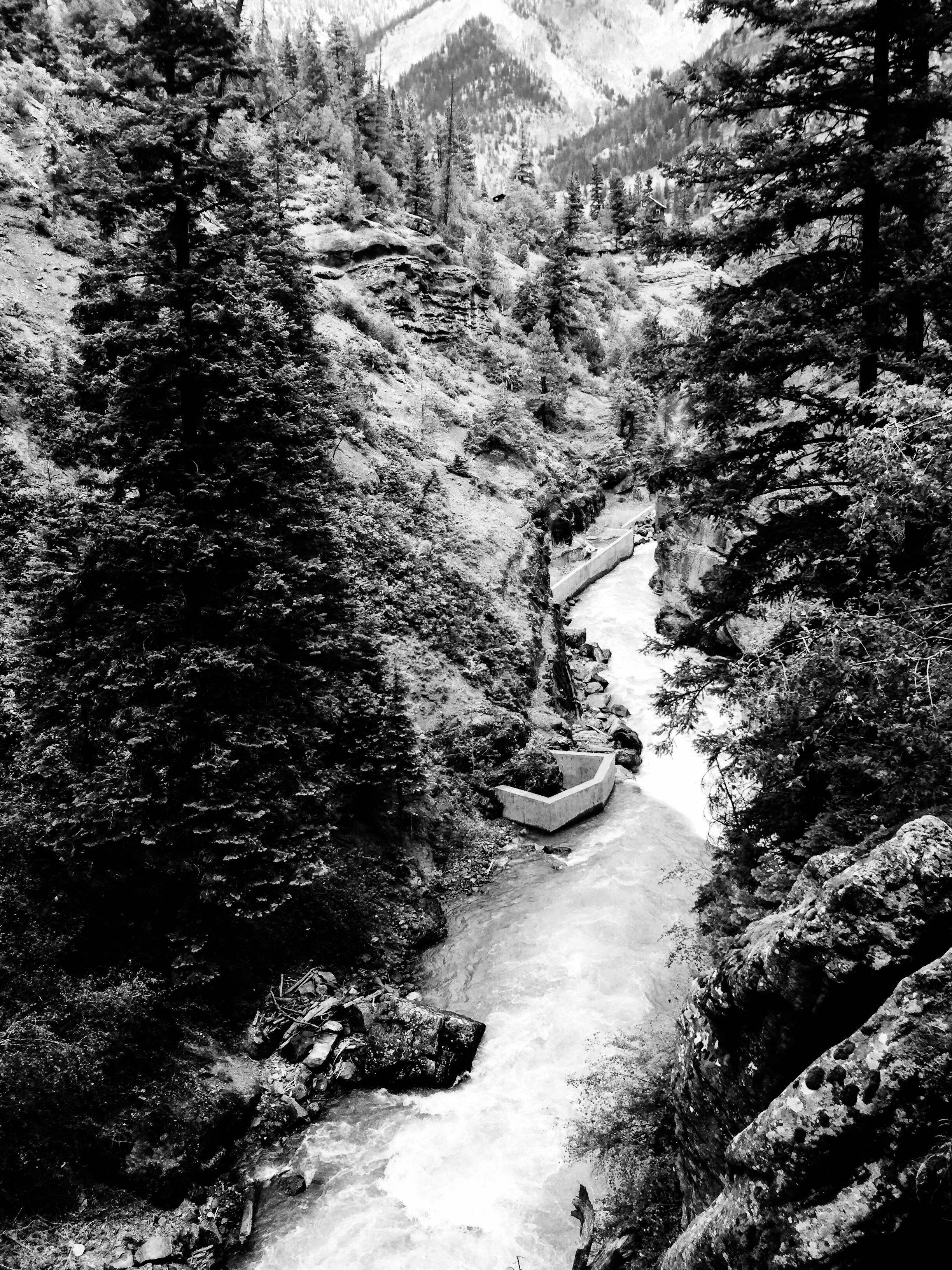Black and white forest prints for sale black and white prints forest photography fine art photography prints for sale home decor bedroom decor