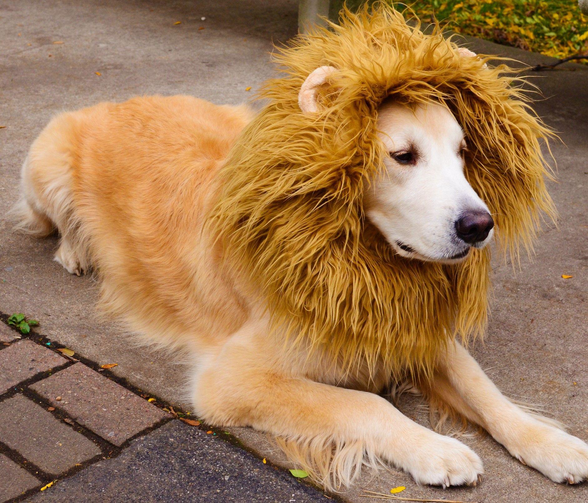 Funny Halloween Dog Costumes Sale Dog Lion Mane Pet Halloween