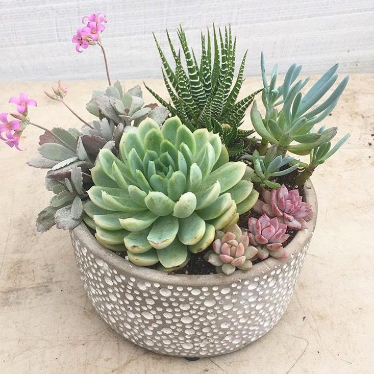 Canadian Succulents This Beautiful Arrangement Is Great As A