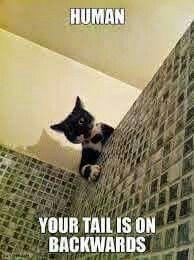 Funny kitty !