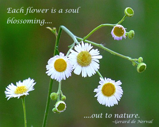 Beauty break 89 nature quotes pinterest nature quotes little white flowers and a nature quote about flowers mightylinksfo