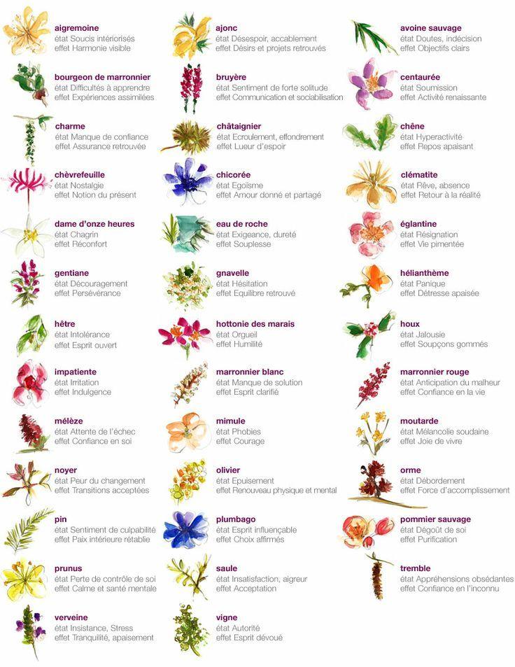 a quoi servent les fleurs de bach sant au naturel pinterest fleurs de bach fleur et. Black Bedroom Furniture Sets. Home Design Ideas