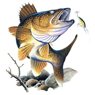 walleye iron on transfer heat transfer t shirt transfer ikan rh pinterest com Drawings of Walleye Fish Walleye Stencil