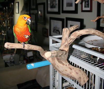 Parrot Perch Bird Perch Natural Wood Multi Branch For Small To Medium Bird Perch Parrot Perch Bird Supplies