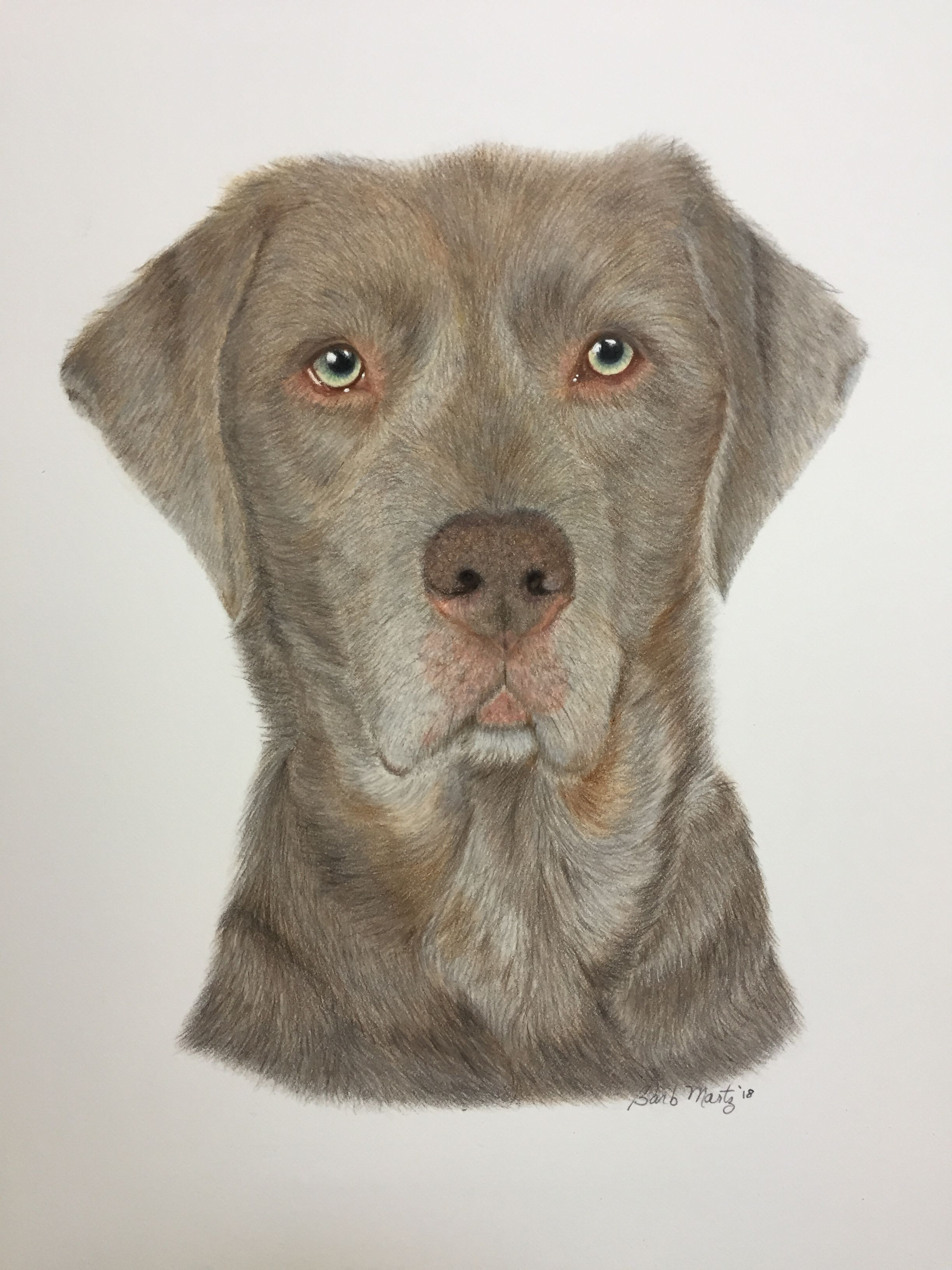 Zuckerbee A Service Dog My Drawings Pet Portraits Service Dogs