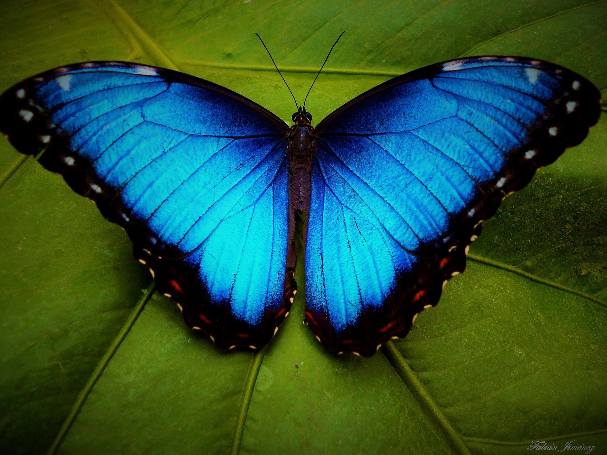 best 25 butterfly facts ideas on pinterest monarch butterfly