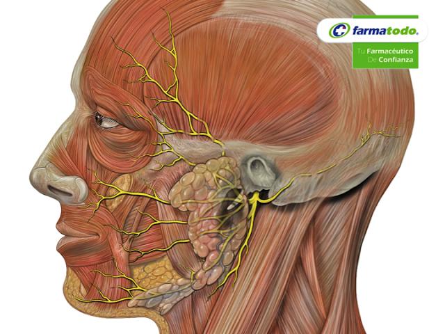 Inflamacion del nervio facial