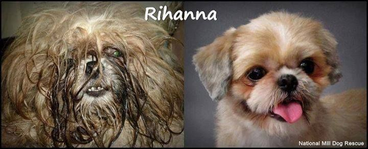 Before And After Picture Taken Of A Puppy Mill Dog Her Life