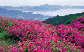 Wow!!!!!  Mountains+Flowers=Amazing View