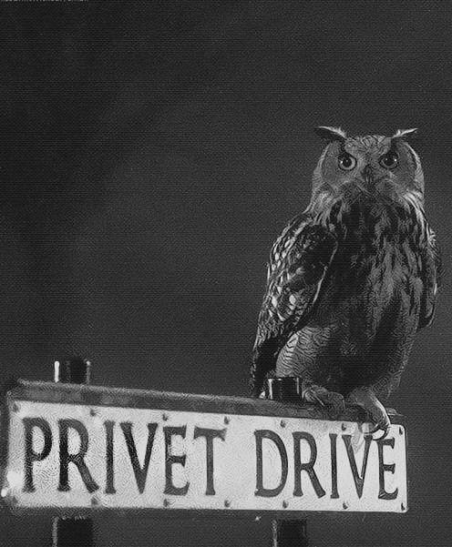 Privet Drive #HarryPotter