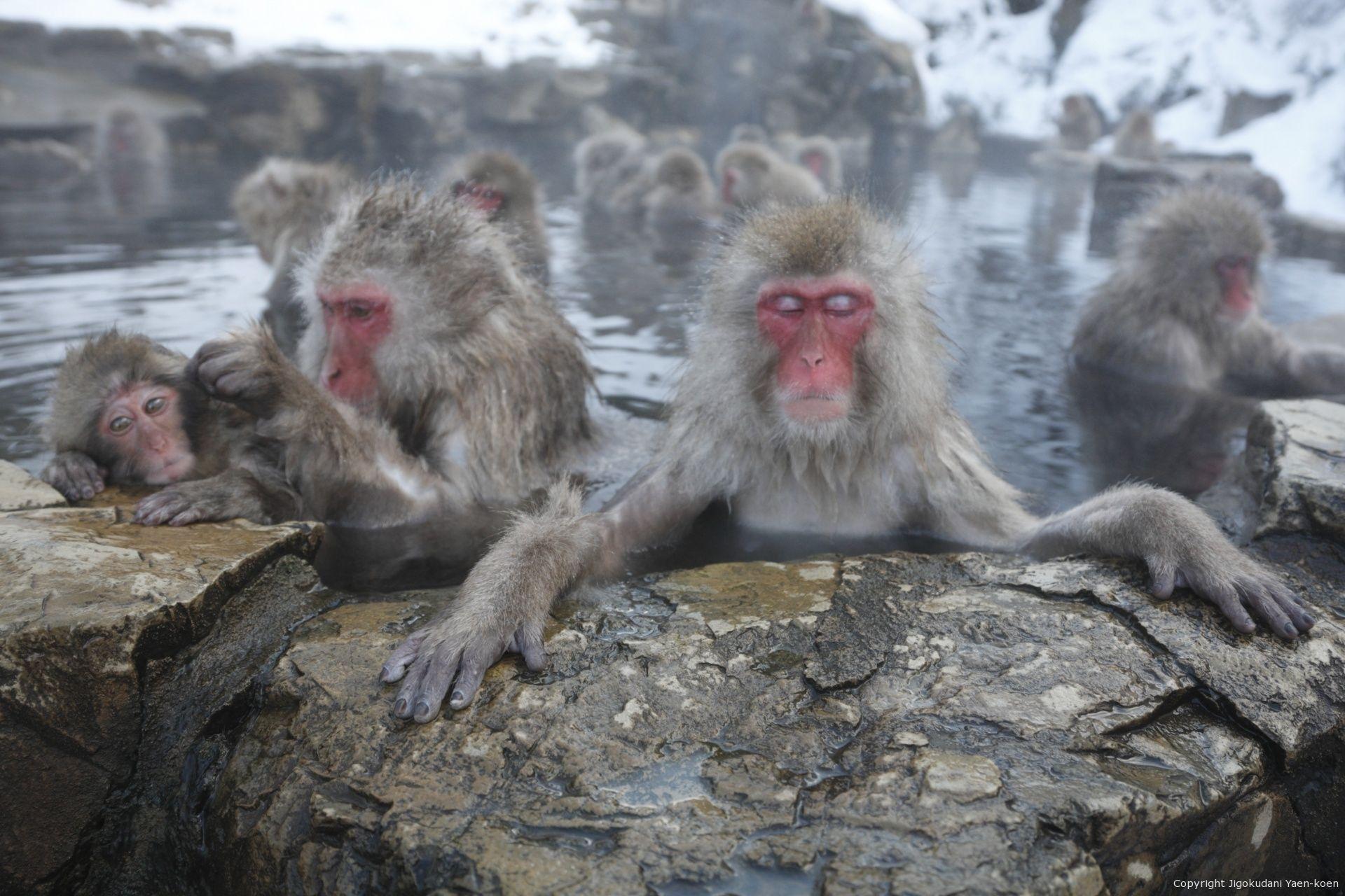 Detail|JIGOKUDANI YAEN-KOEN|Welcome , Japanese Monkey to the world
