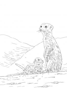 Meerkat Mother With Pup Animal Coloring Pages Meerkat Cat Art