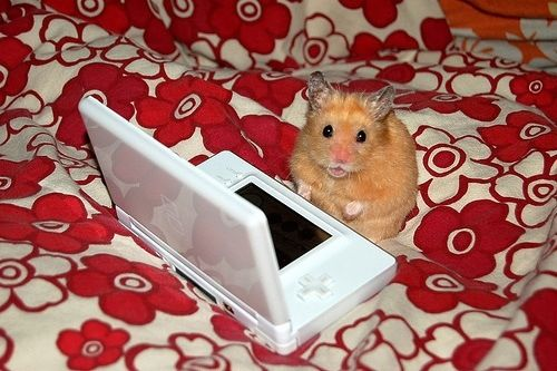 Pin by Kimber on Animals Funny hamsters, Hamster