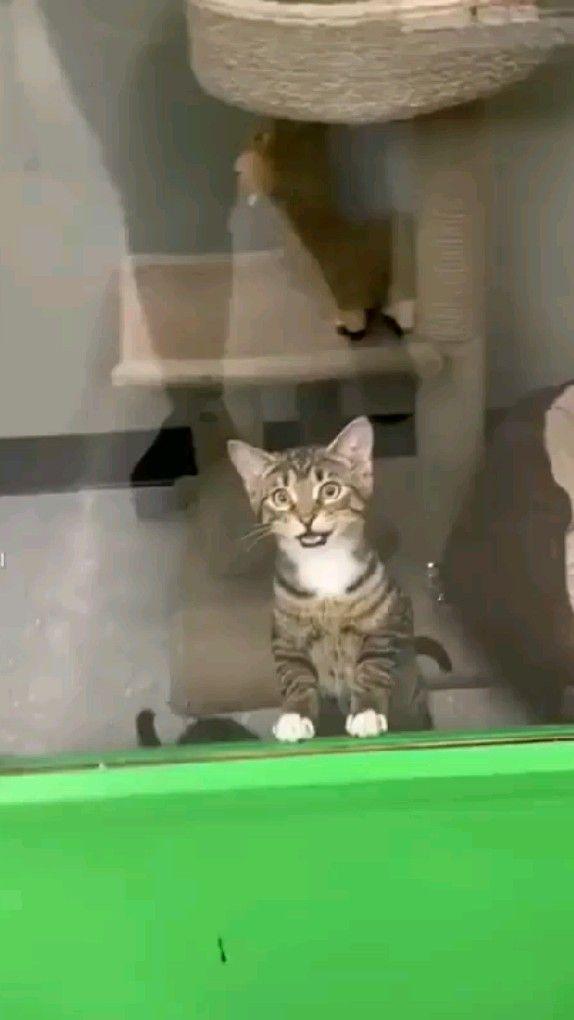 Funny Cat 😂♥️♥️😂😂🔥🔥🔥🔥🔥