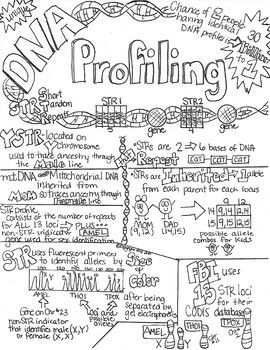 DNA Profiling STR Sketch Notes Doodle Notes W/Teacher's
