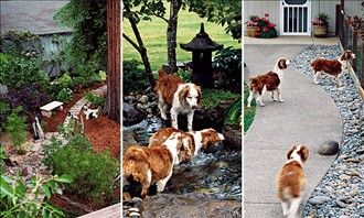 How To Landscape A Dog Friendly Garden. Includes A Link To A Comprehensive  List
