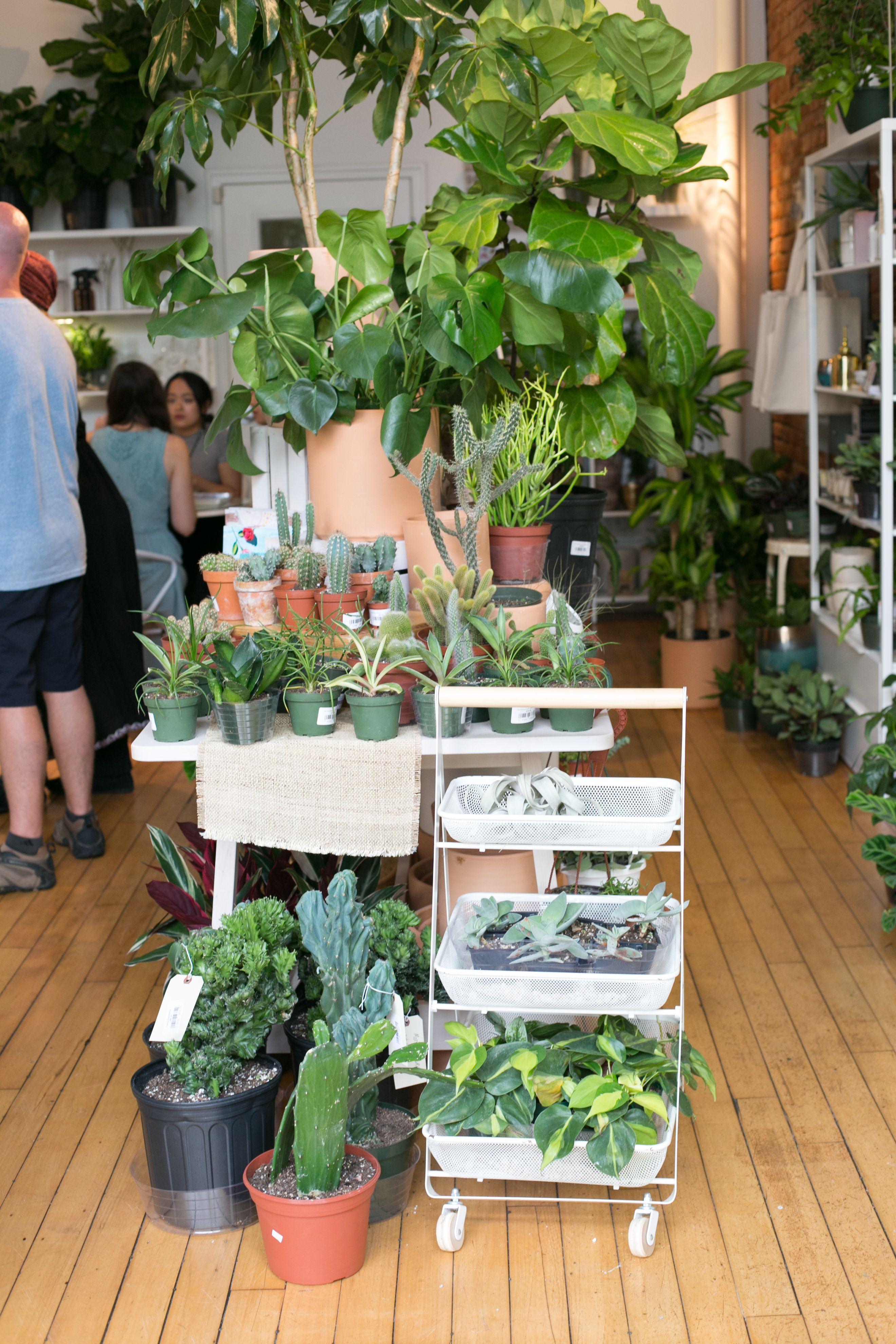 The Zen Succulent Raleigh Plant Shop Plants Are Friends