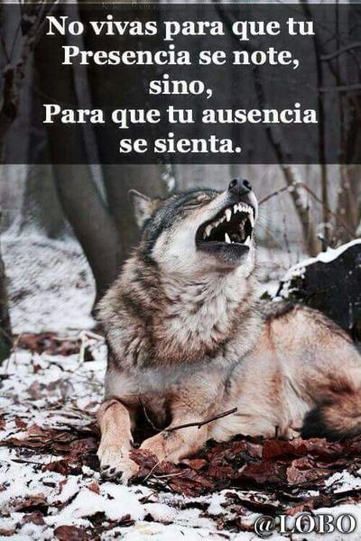 Resultado De Imagen Para Frases De Lobos De Amor Lobo Solitario