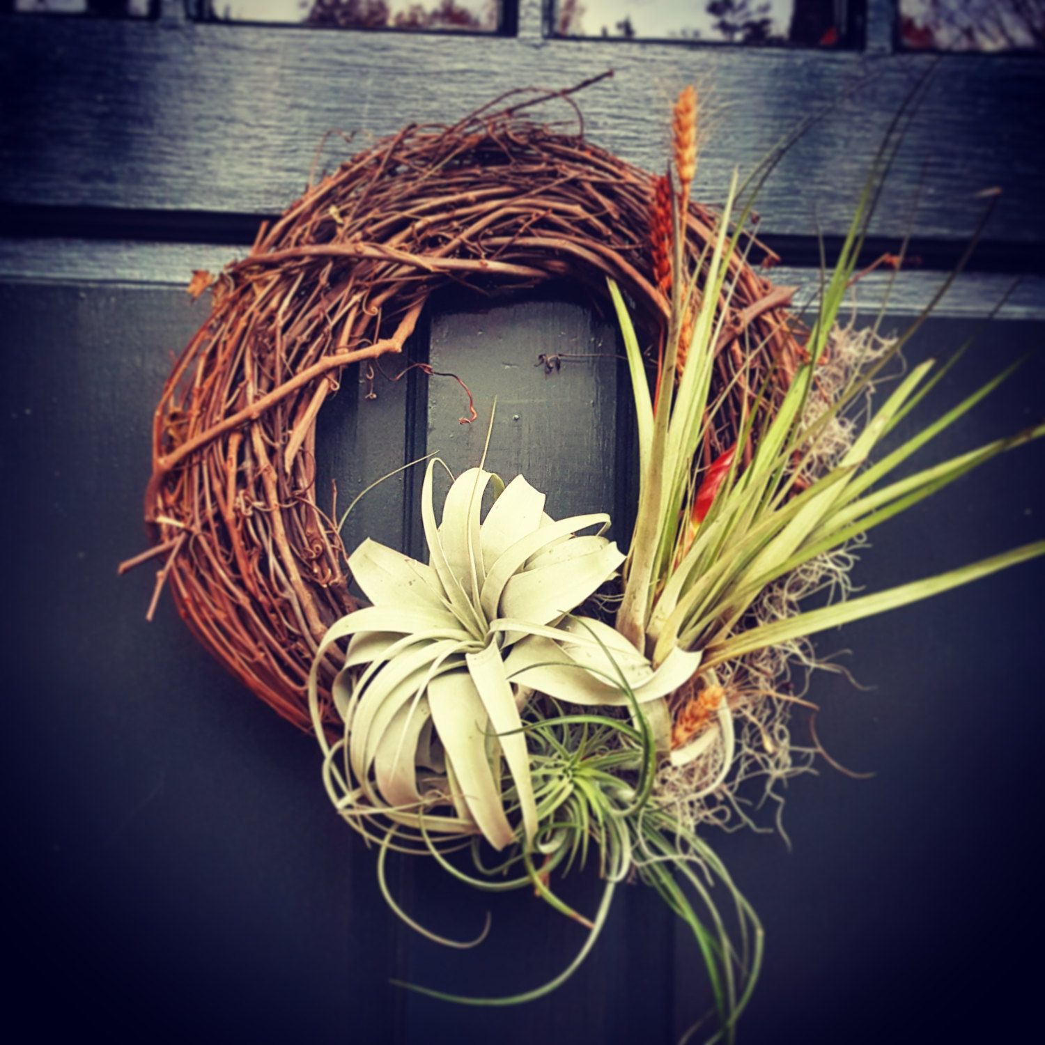 Living Wreaths   Tillandsia Air Plants (65.00 USD) by BloomPlants