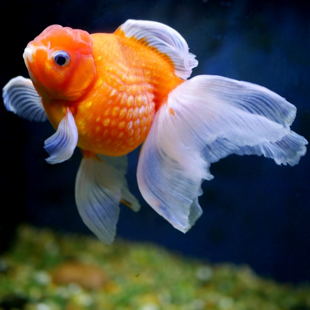 Freshwater Fish Hatchery