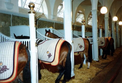 The Royal Mews, London. (It is obvious that Queen Elizabeth runs a tight ship when it comes to stable management!)