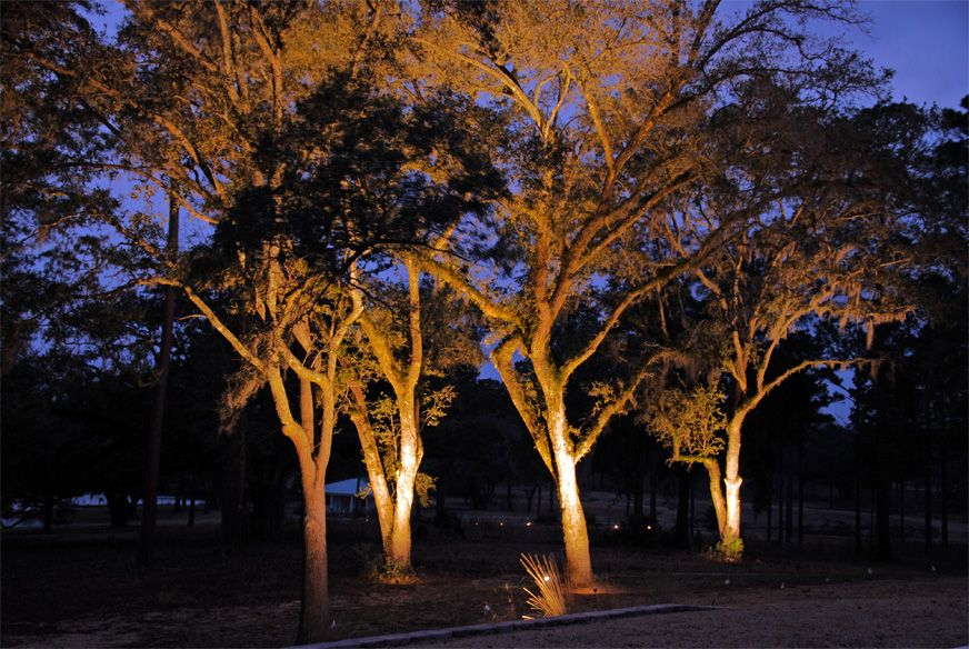 Elegant Dining Room Outdoor Lighting For Trees With Landscape Lighting Photo