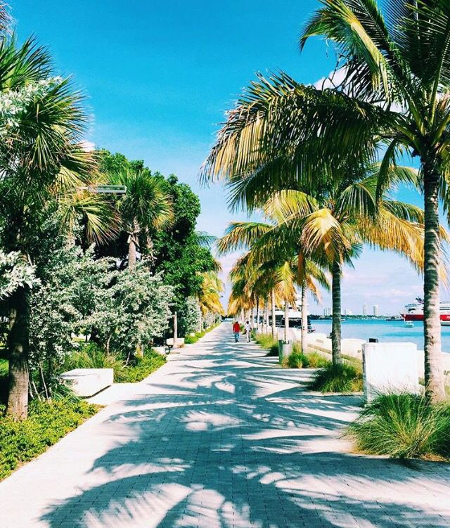 Palm Beach Chic In Miami: Miami. Love The Palm Trees! I Really Think The Palm Trees