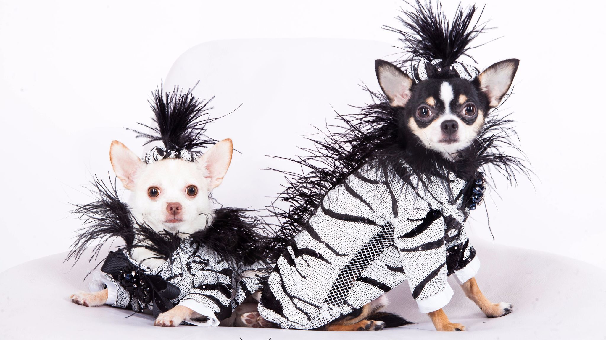 Take A Look At What The Most Fashionable Pets Are Wearing These Days Pets Pet Fashion Dog Clothes