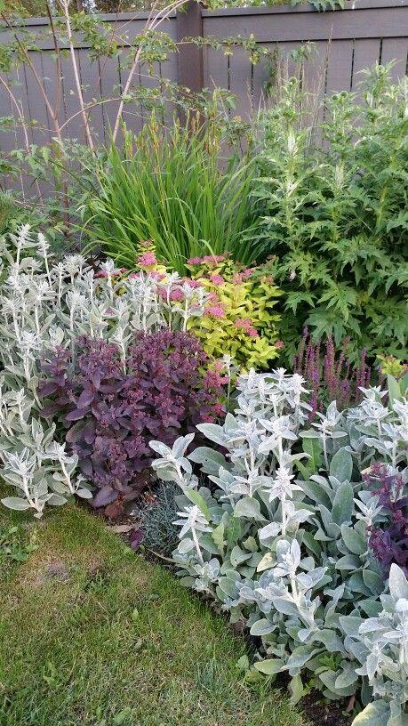 Plant Combos Sedum Lamb S Ear And Spirea Plants Garden Projects Front Garden