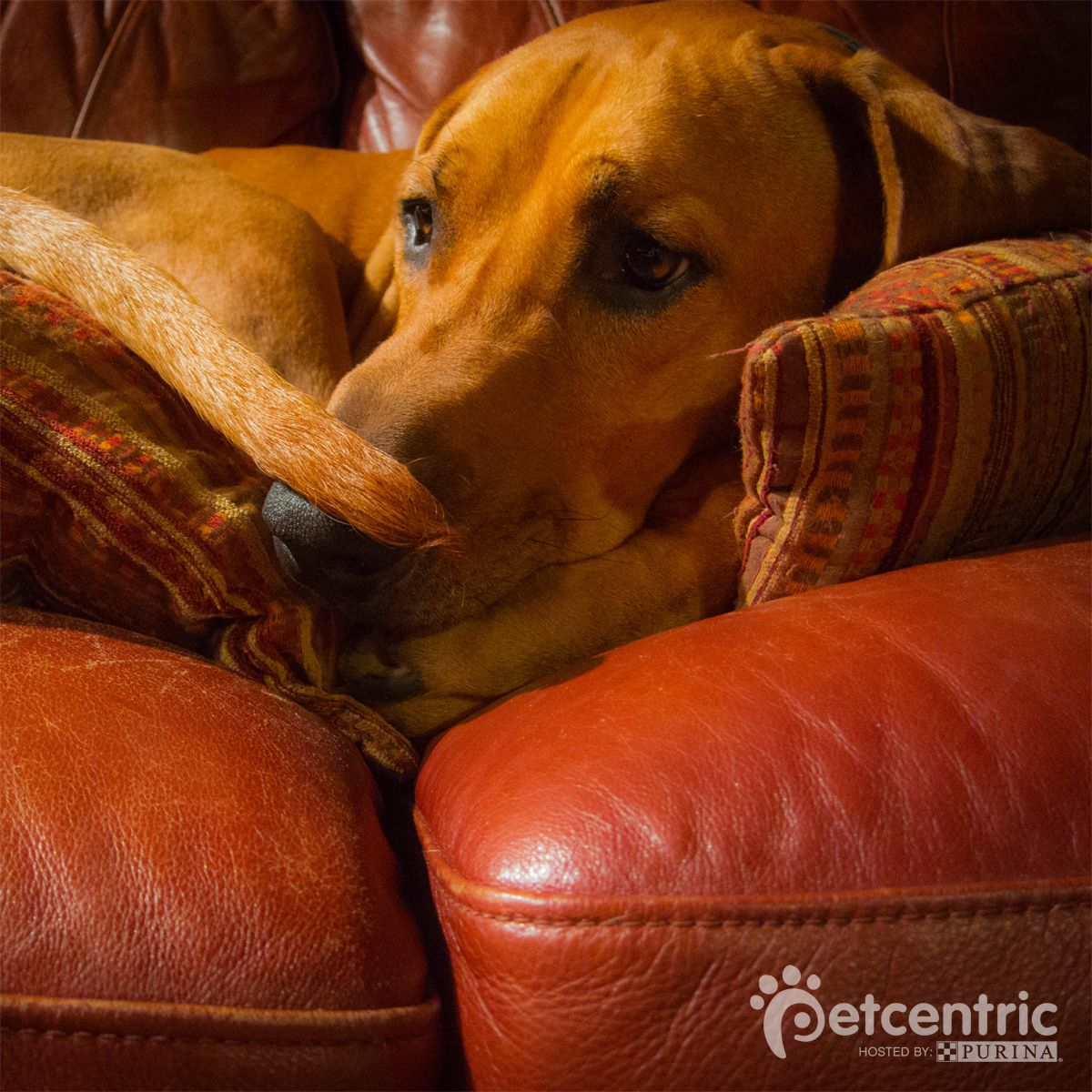 Is your pet an expert on being comfy eko sure is marking our dog nvjuhfo Gallery