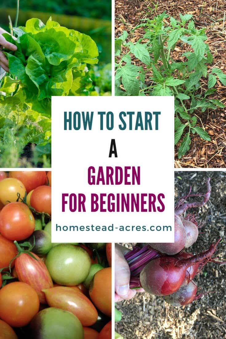 How To Start A Vegetable Garden For Beginners | Starting a ...