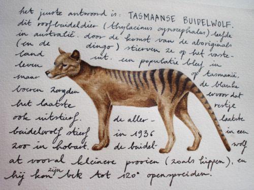Anoukmaes I Painted A Tasmanian Wolf 2012 Tigre De Tasmania