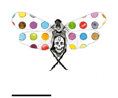 Damienum Hirstillus  Papillons de collection | Le Cabinet de curiosités www.facebook.com/...