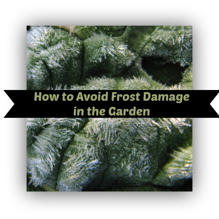 Avoiding frost damage in the garden. Come Join The Garden Geeks on Facebook! http://www.facebook.com/thegardengeeks