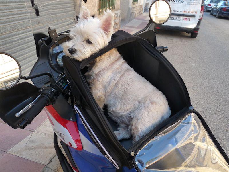 Casco Perro Moto Viaje y Paseo Collares, Correas y Arneses