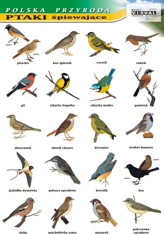 Ptaki Zimą Szukaj W Google Ptaki Montessori Education