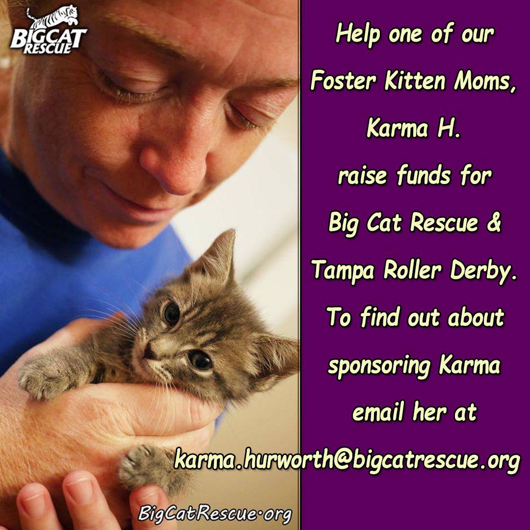 Sentencing Statement Big Cat Rescue Cat Rescue Kitten Mom