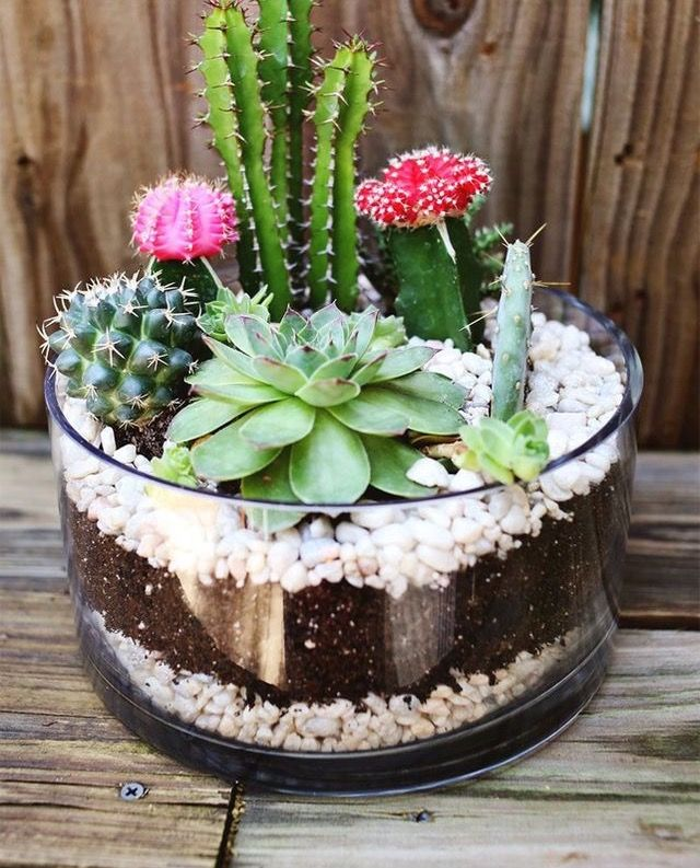 Pin von TimberlyFay auf Succs & Plants | Pinterest