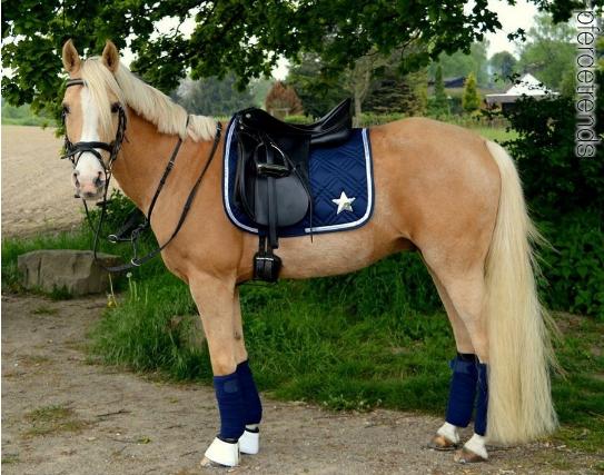 84d3802108d62 Taylor   awesome   Haflinger horse, Horse photos, Horse fashion